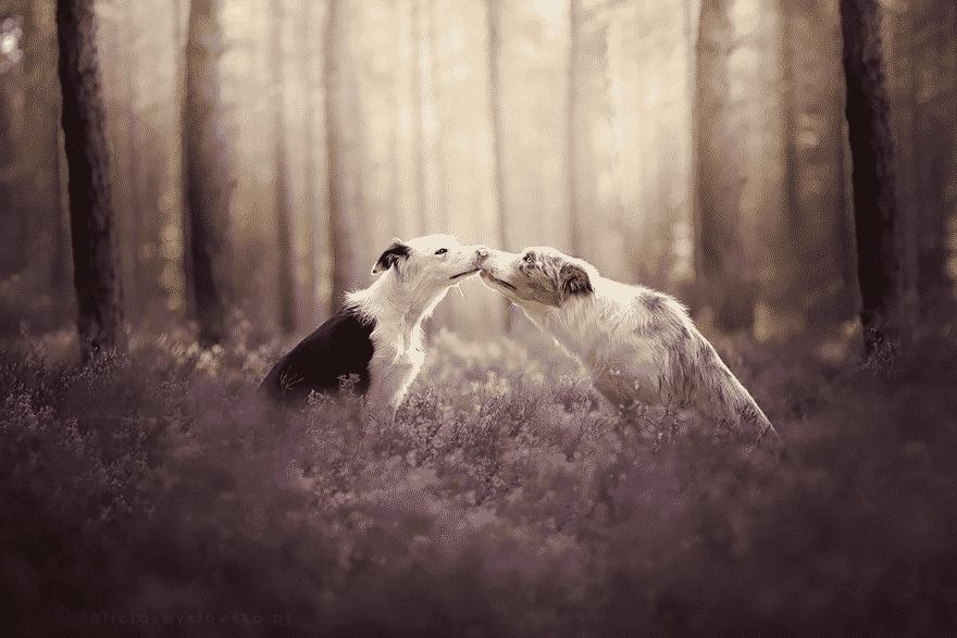 Фотография собак покорившихся весне