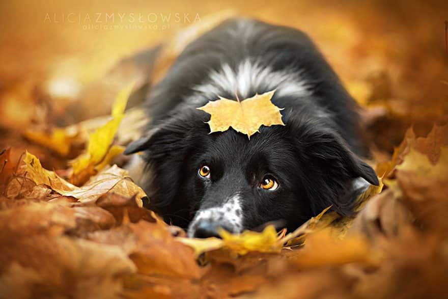 Фотография собаки в желтых листьях