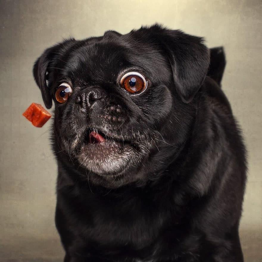 Собачья морда