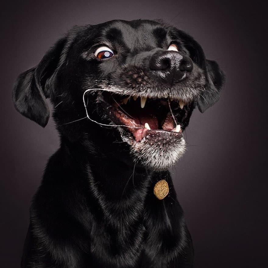 Выражение собаки