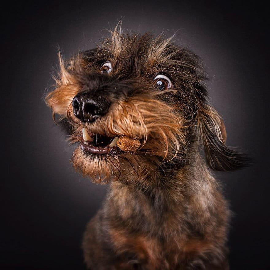 Собачья пасть перед ловлей корма