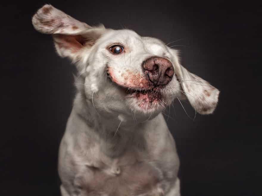 Собака в момент хватания корма на лету