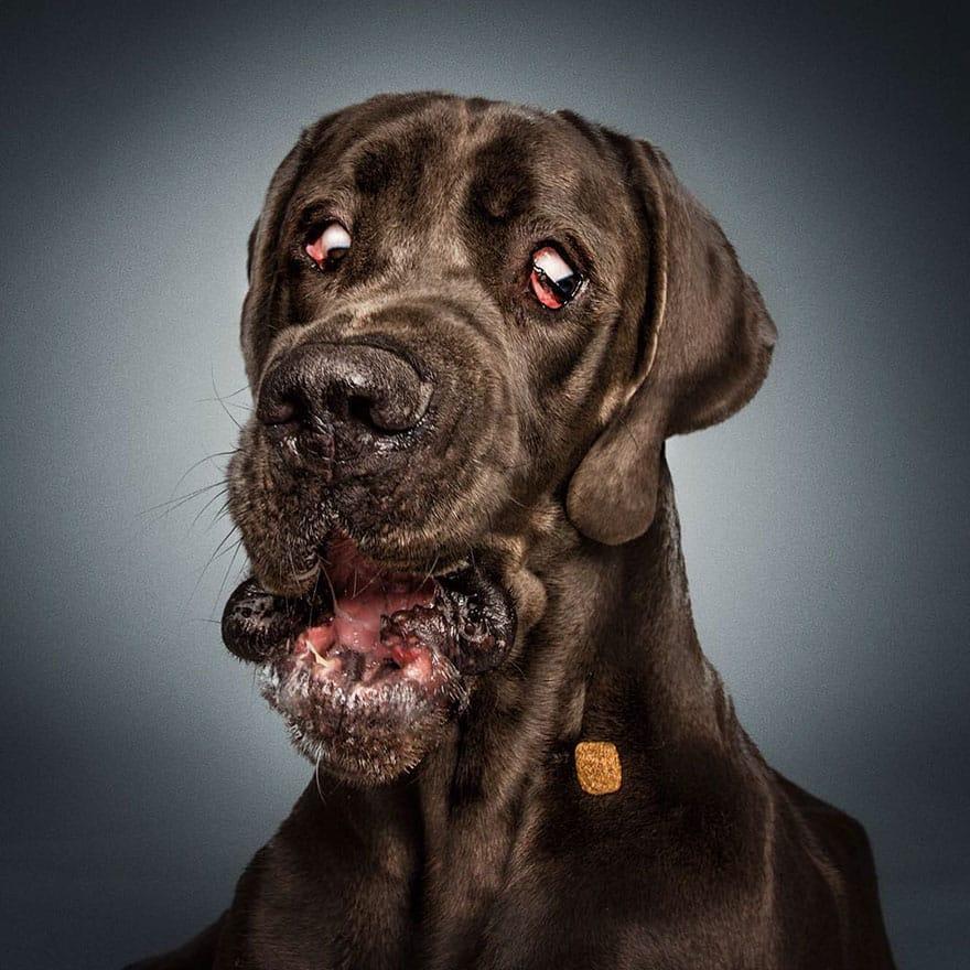 Кусочек корма перед мордой собаки