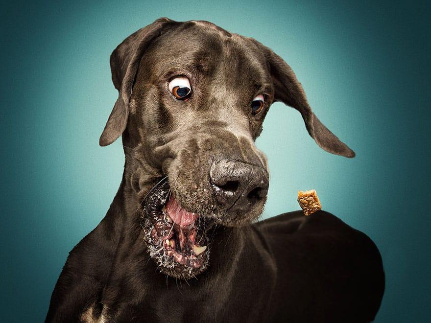 Такой свою собаку вы никогда не видели