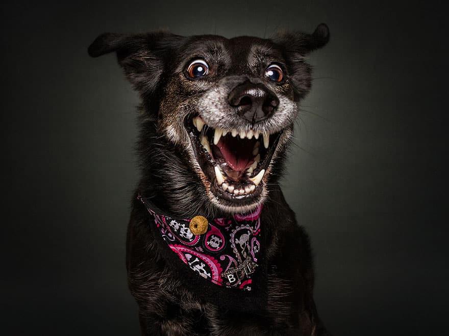 Уникальный момент ловли корм собакой