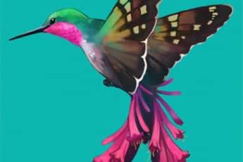 Дух чайной церемонии колибри