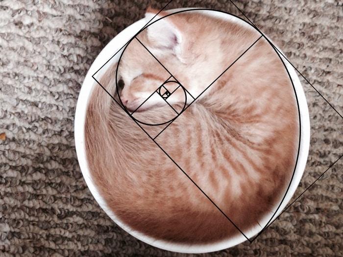 Кошка и золотое сечение