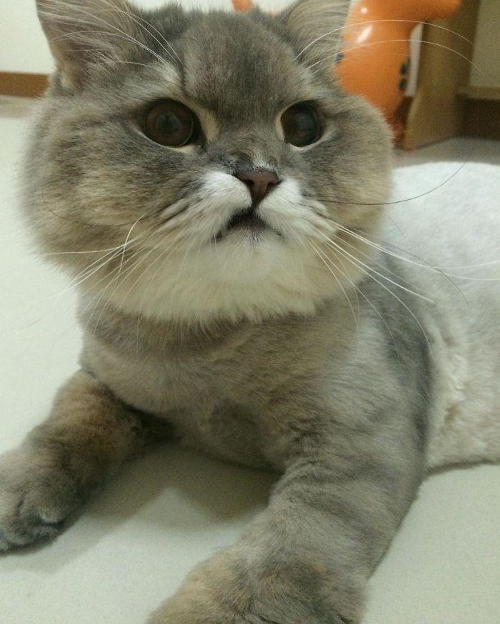 Самый знаменитый кот в Инстаграмме