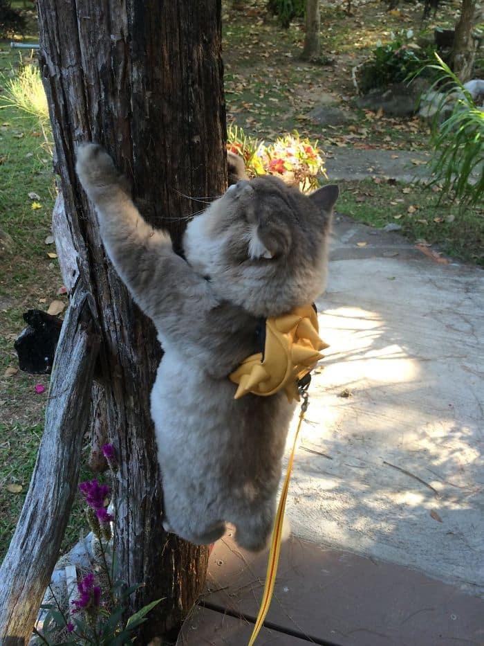 Кот на стволе дерева