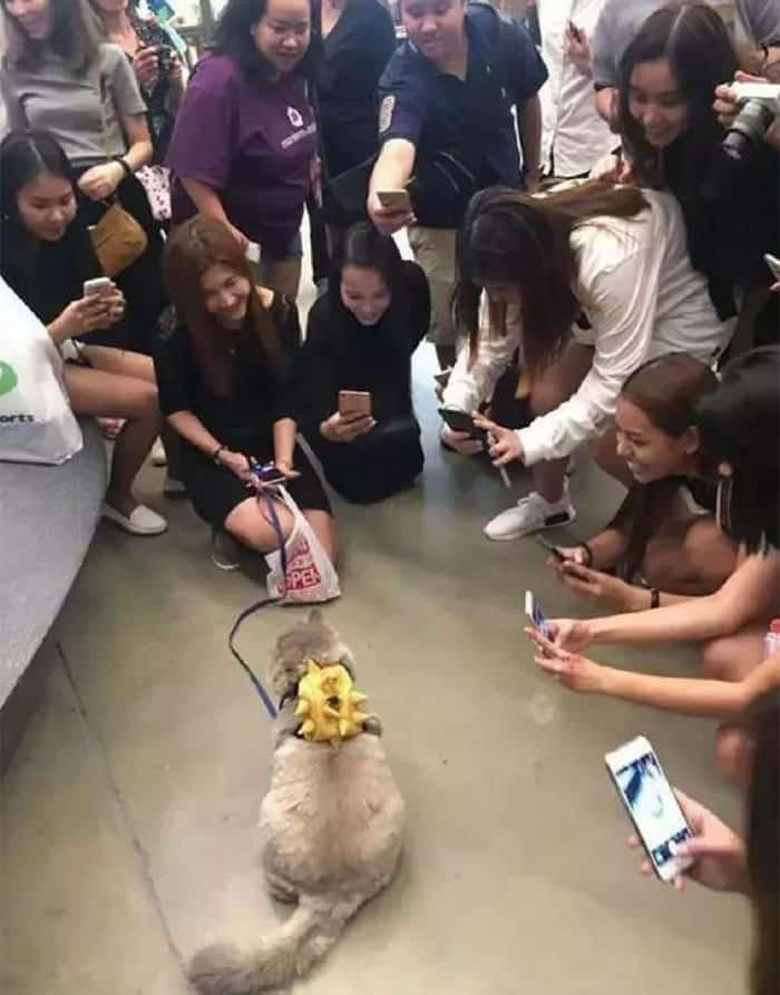 Кот среди поклонников