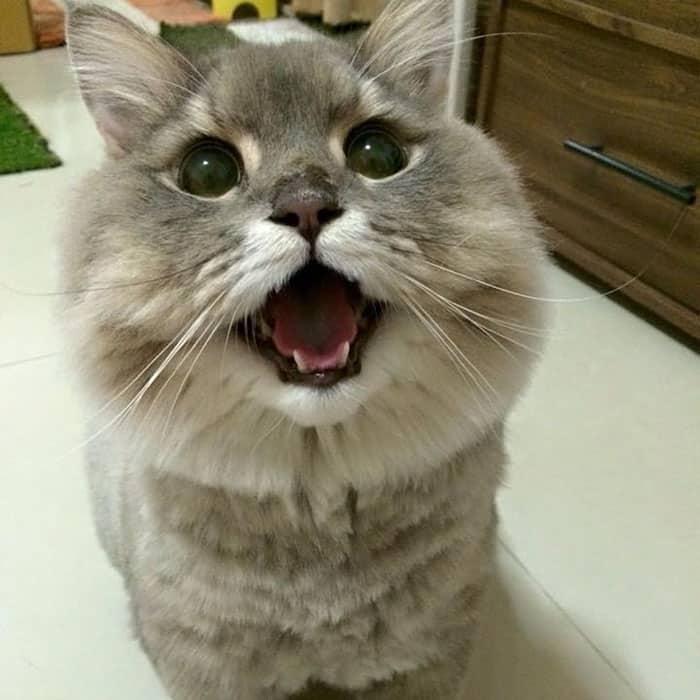 Селфи кота Бона