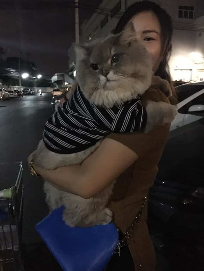 Сказочно пушистый кот