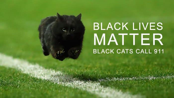 Черная кошка испортила матч