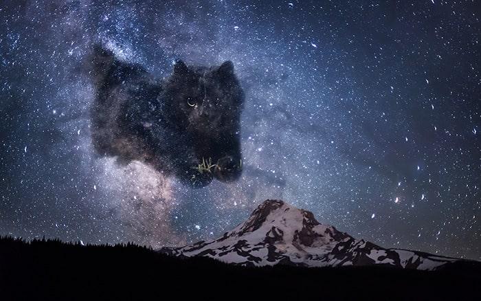 Черная фантастическая кошка