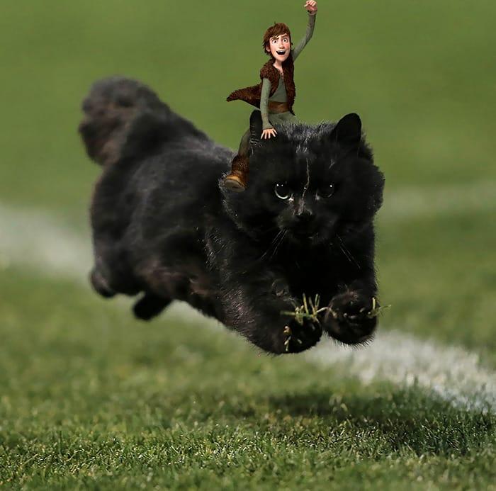 Черная кошка на поле