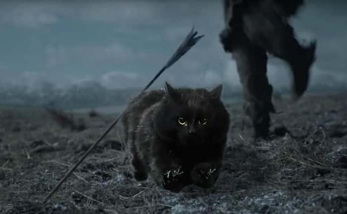 Черная мистическая кошка