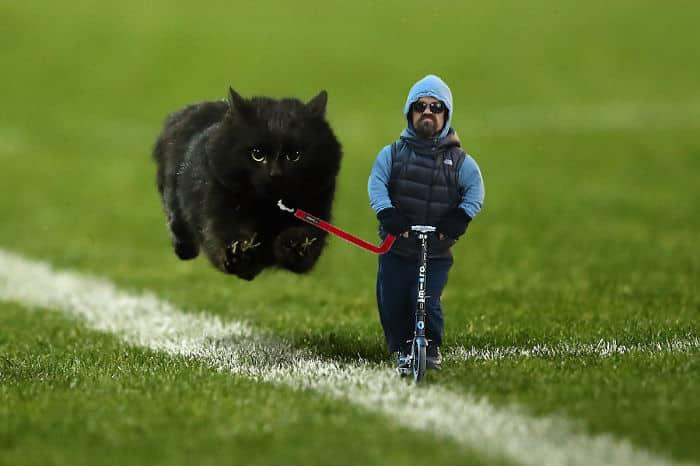 Черная кошка на поводке