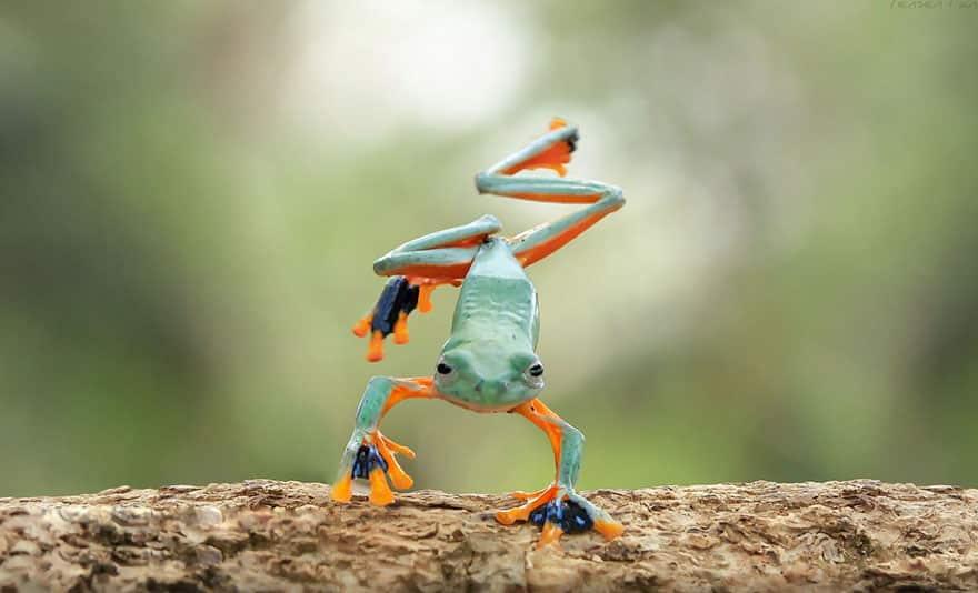 Лягушка - акробат