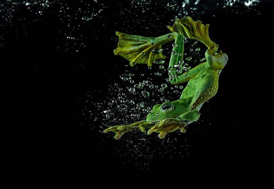 Обыкновенная лягушка