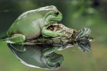 Портрет лягушки