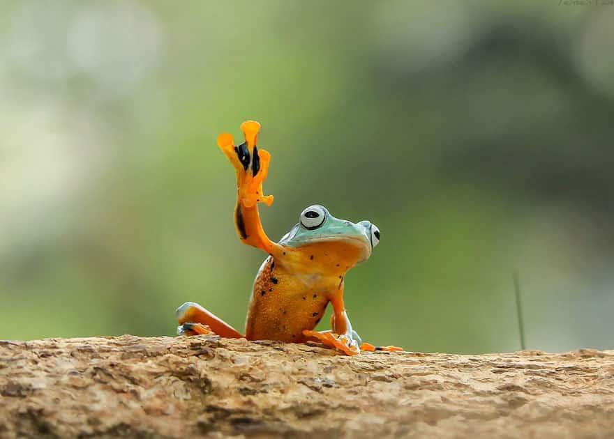 Привет от лягушки