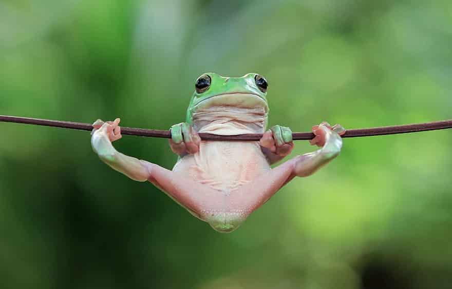Лягушка на перекладине