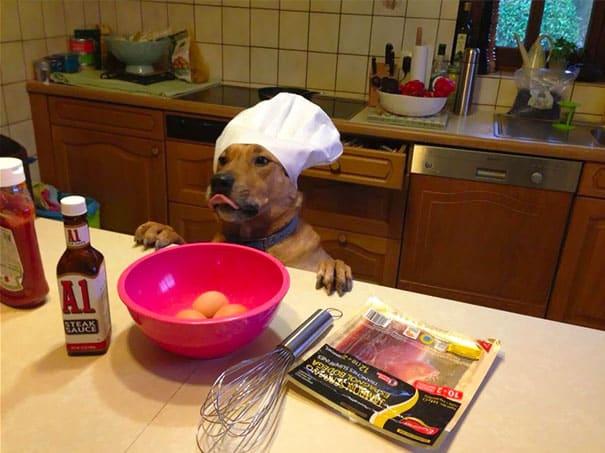 Собака кулинар