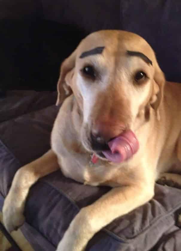 Свободный пес