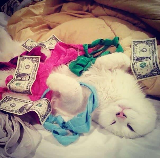 Блаженная кошка