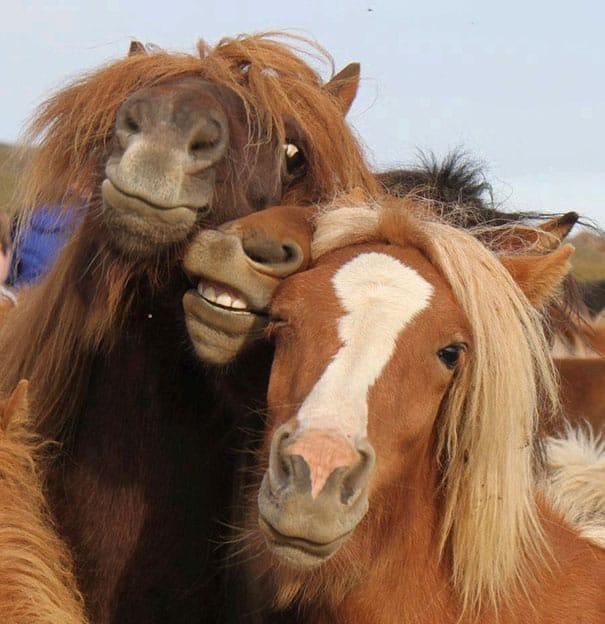 Веселые кони