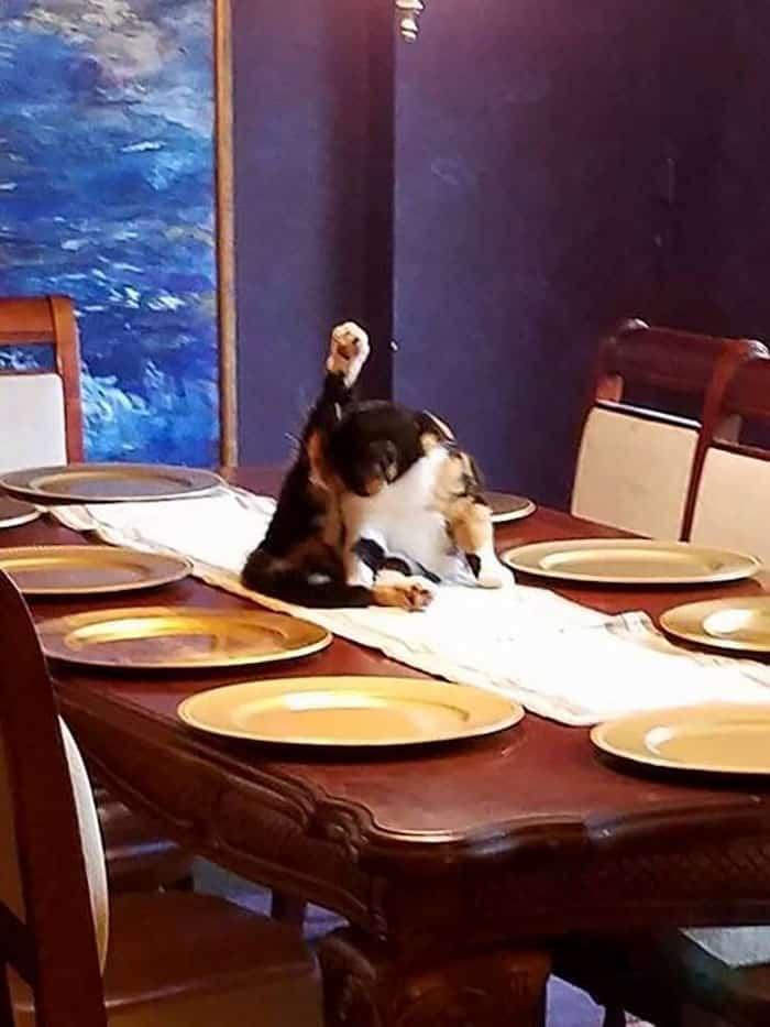 Кошка на праздничном столе