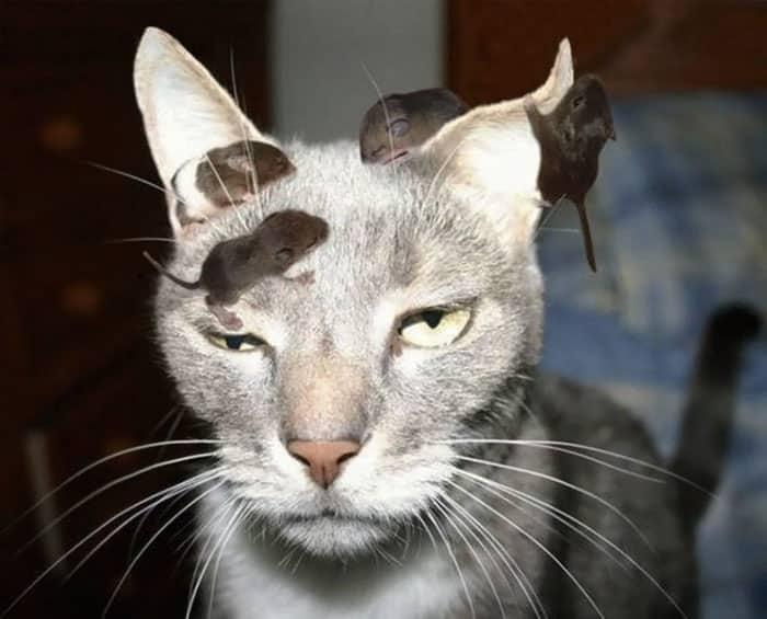 Кошка и мыши