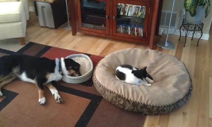 Кошка на собачьем месте