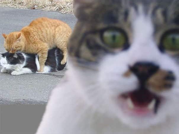 Ужасный кот