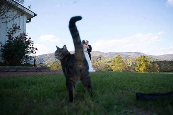 Неожиданное появление кота в кадре