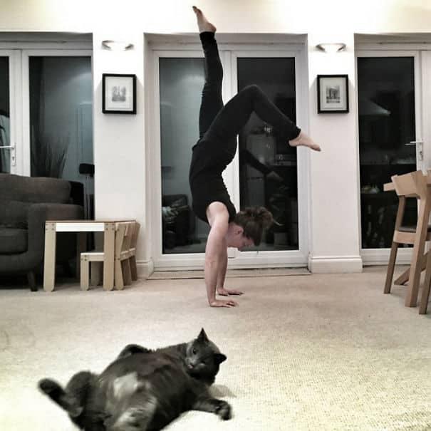 Утренняя гимнастика с кошкой