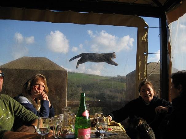 свободный полет кота