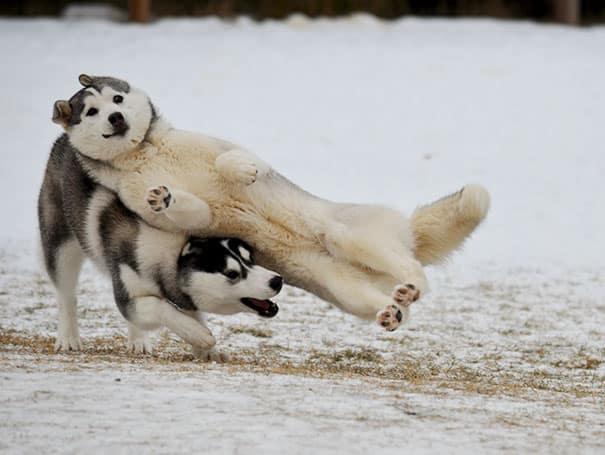 Улетный пес