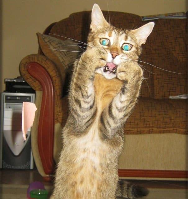 Смешной кот в ужасе