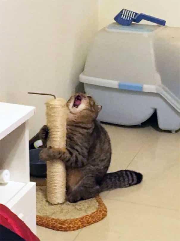 Смешной кот в туалете