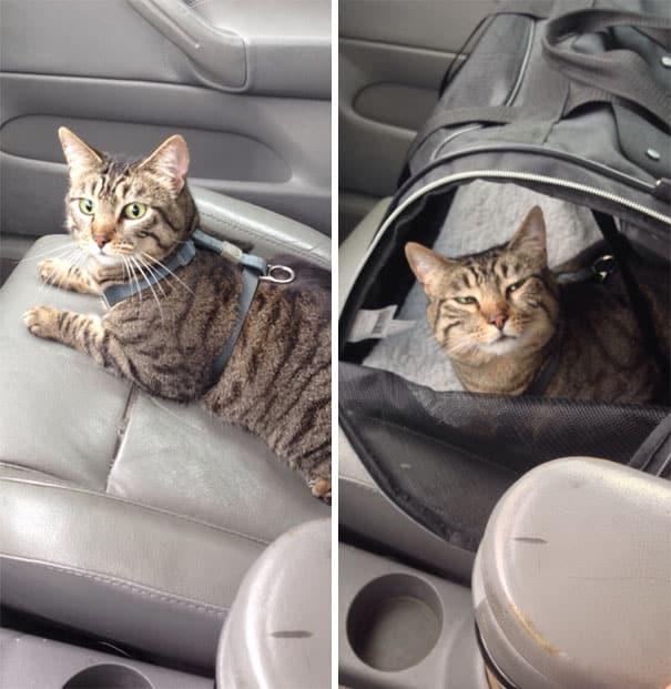 Смешной кот в машине