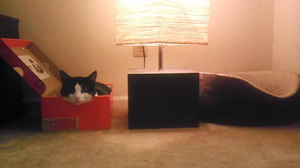 Кошка рядом с подарком