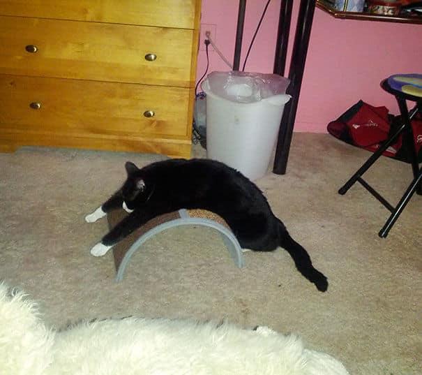 Строптивая Кошка