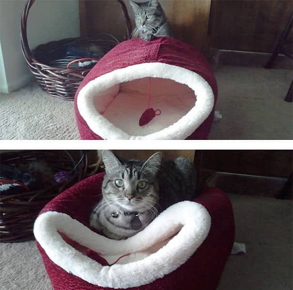 Кошка и подарок для нее