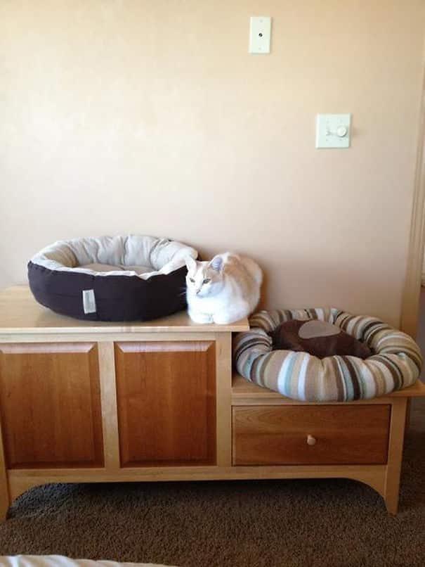 Независимая Кошка