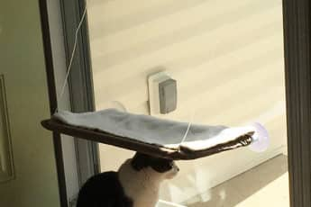 Обидчивая Кошка
