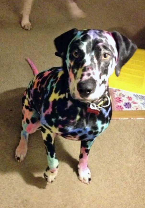 Боди-арт для собака
