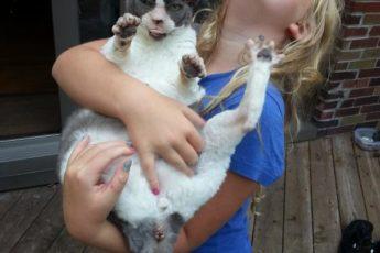 Ребенок с кошкой на руках
