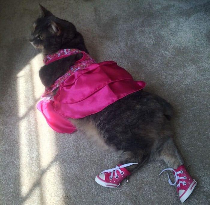 Наряженная кошка