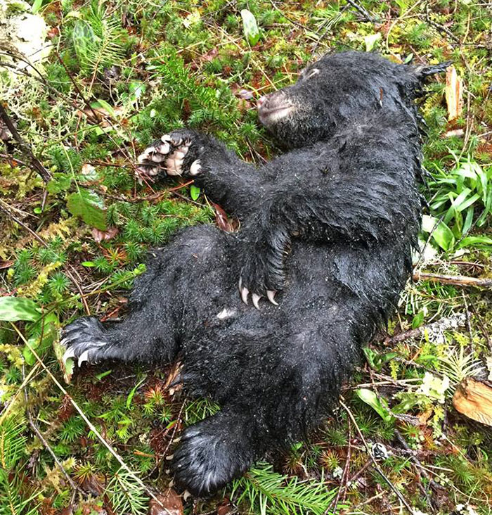 Брошенный медвежонок